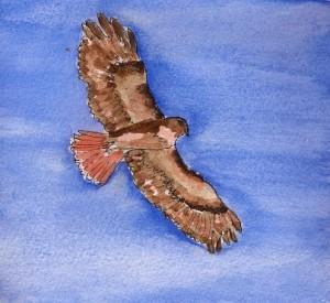 rt hawk flight