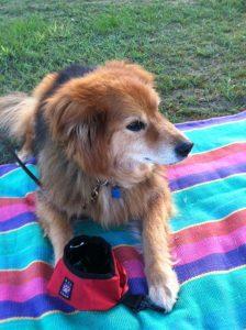 harper picnic blanket